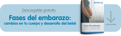 Fases del embarazo - TEXT