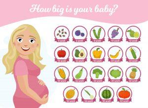 tamaño del feto por semanas